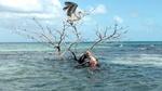 Belize bird watching